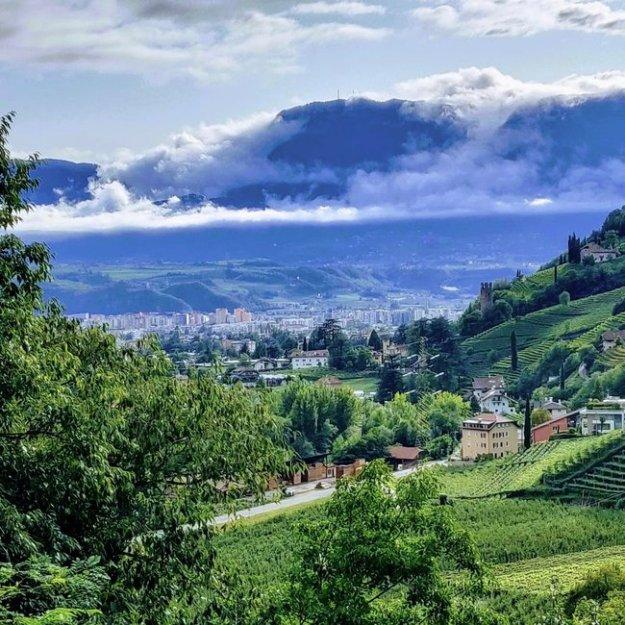 Italia diversity vino wine