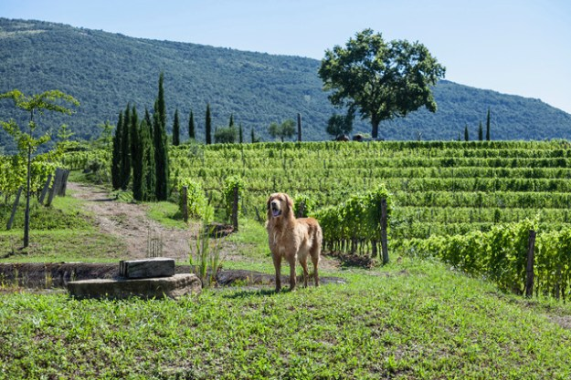 Gravner vineyards fruili venezia giulia italy wine