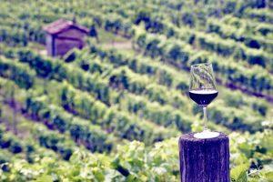 la gironda wine monferrato barbera d'asti wine