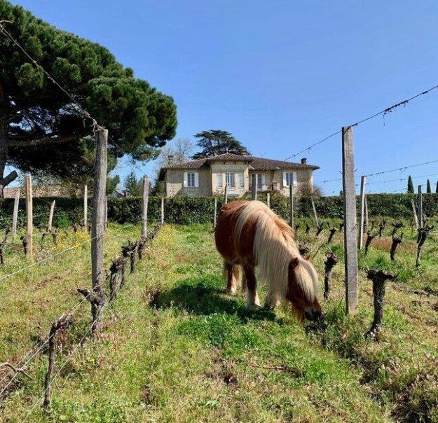 Charivari organic wines bordeaux