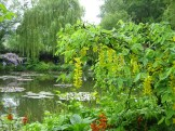 Monet diverted water from a nearby river to create his ponds photo - Karen Anderson