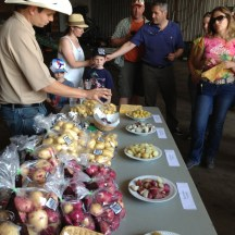 Hanno Buyks shares a sample of his family's potatoes photo - Karen Anderson