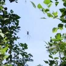 spiders are an organic gardeners friend - photo - Karen Anderson