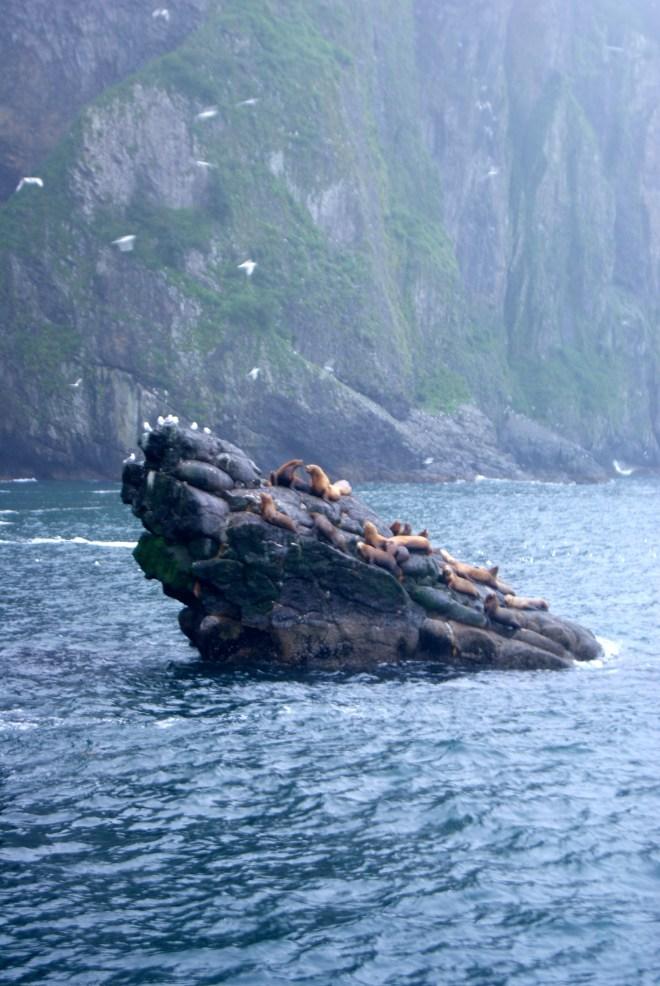 Marine Life in Kenai Fjord, AK