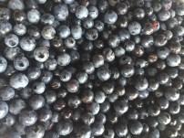 Blueberries - photo credit - Karen Anderson