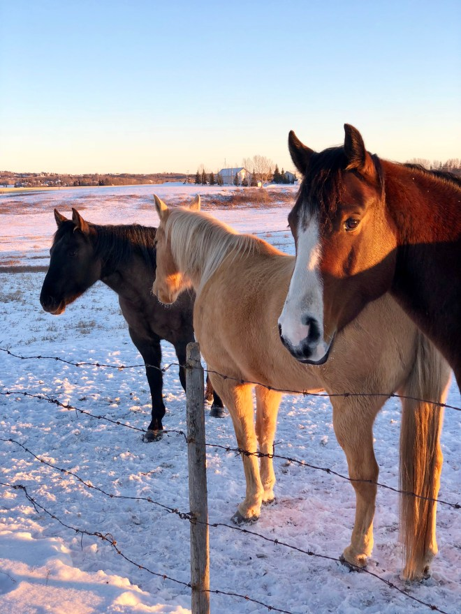 horse photo by Karen Anderson, Savour it all blog