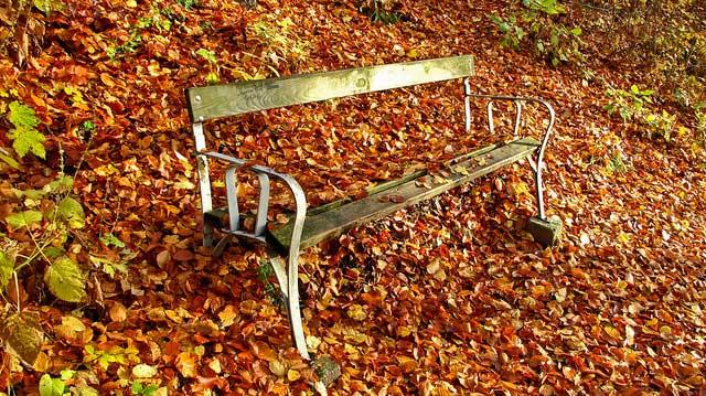 jesen-lisce-006