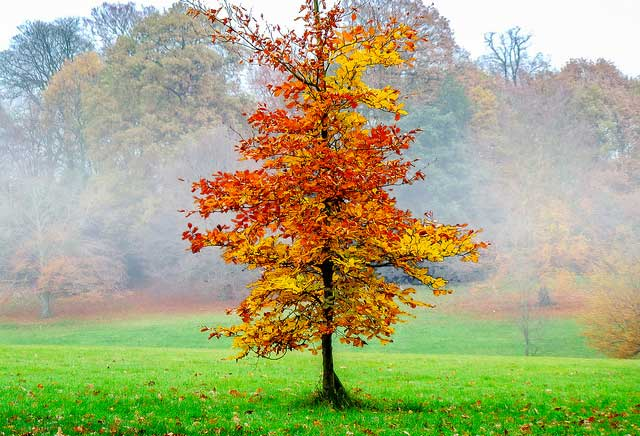 jesen-lisce