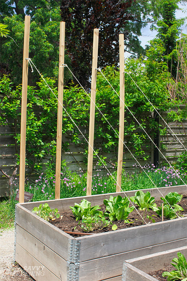 Consider growing up if you are gardening in a small space!