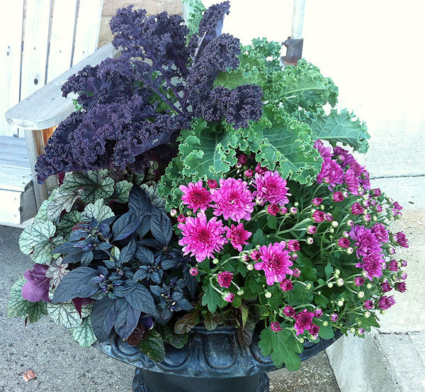 Purple fall container