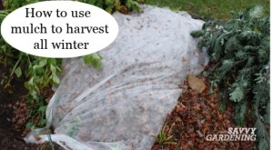 A simple winter mulch = easy winter harvesting