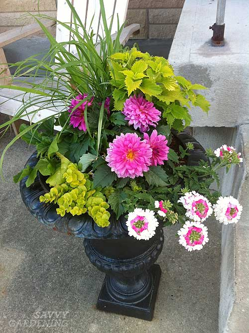 Edible and ornamental container