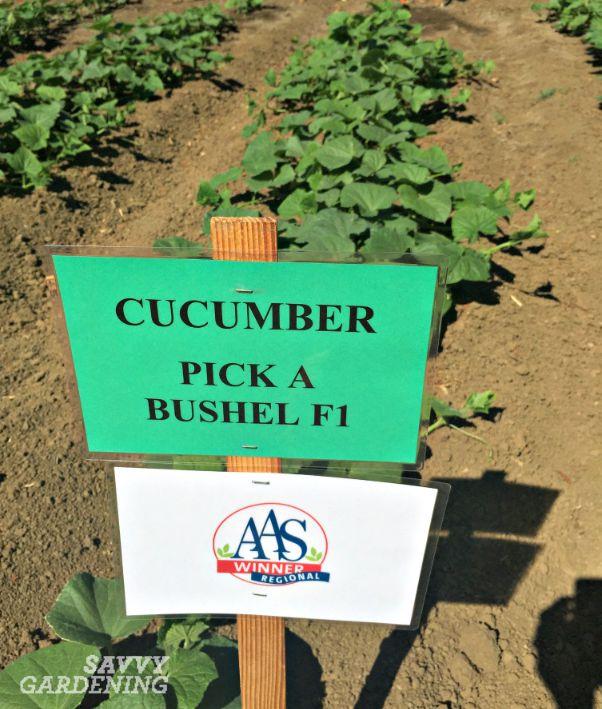 Pick a bushel