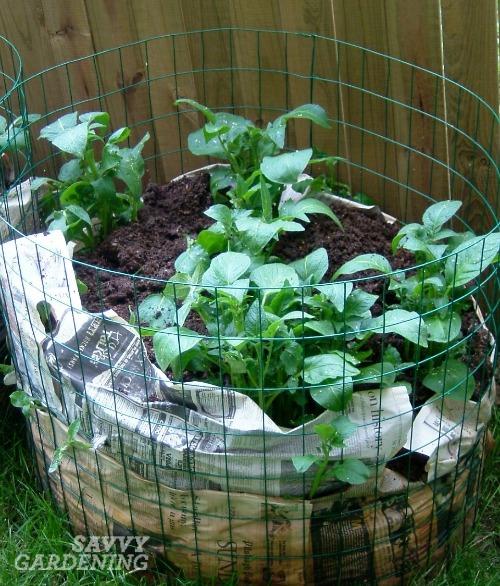 feeding your garden soil by building a potato bin