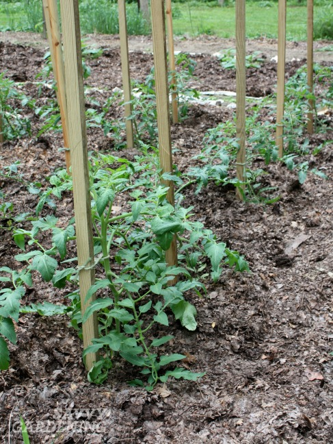 Feeding your garden soil with fall leaves