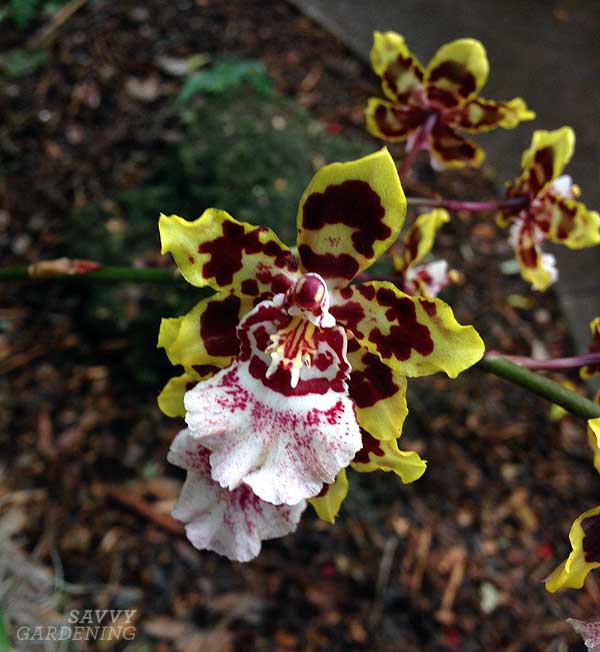 The Million Orchid Project