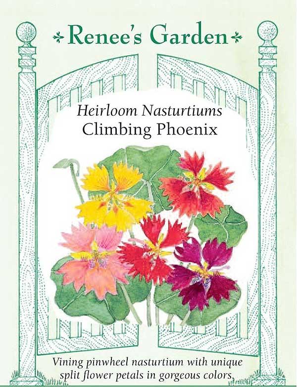 climbing phoenix nasturtiums