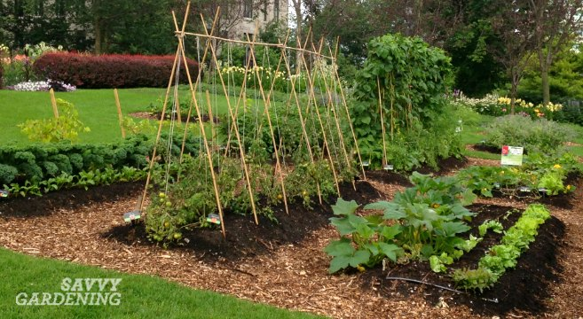 28 Tips For A Small Garden: 6 Vegetable Gardening Tips Every New Food Gardener Needs