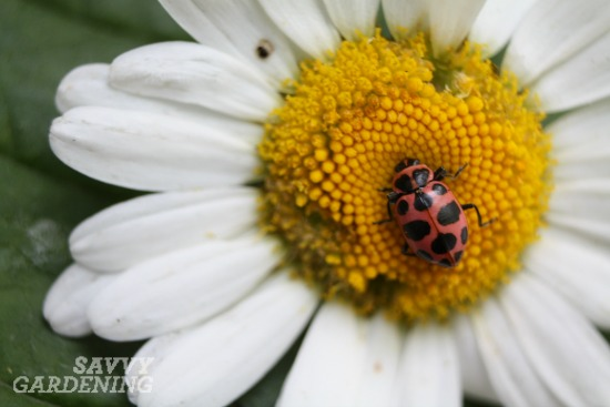 ladybug, spring garden clean up