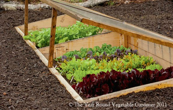 Get a jump start on spring with a cold frame!