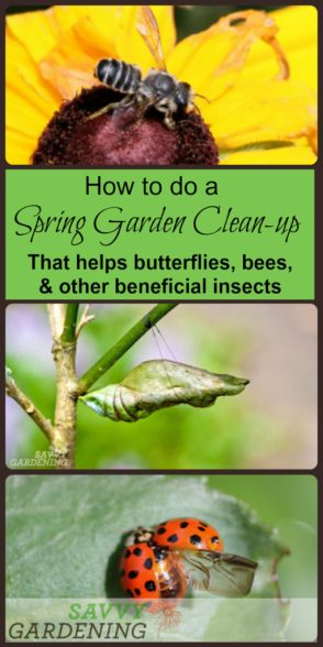 This spring garden clean up is perfect for encouraging bees, butterflies, and other beneficial insects in the garden.