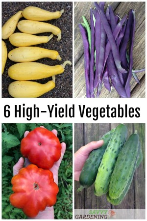 6 High-Yield Vegetables for Your Garden