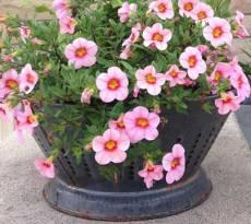 upcycling garden ideas: colander