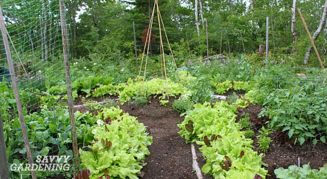 Planting Potatoes In Raised Bed