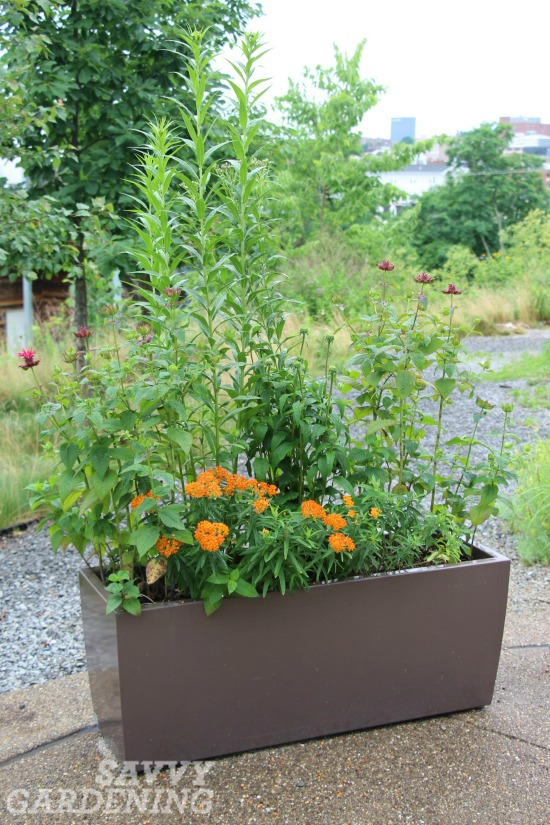 container gardening trends for butterflies