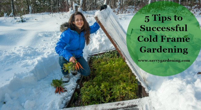 5 Tips To Successful Cold Frame Gardening