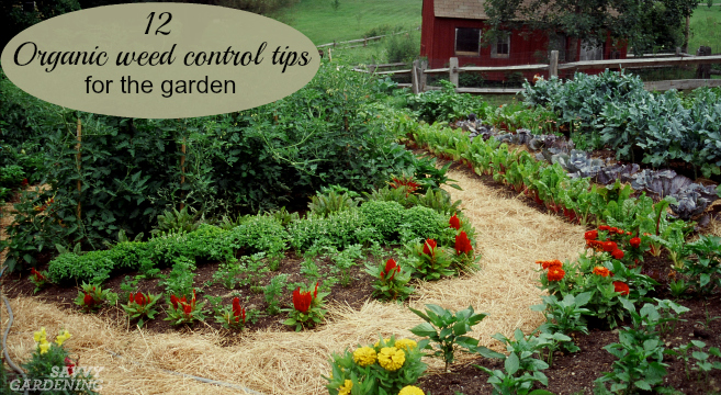 Organic weed control tips for gardeners