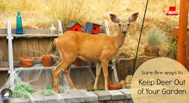 Deer Proof Gardens 4 Sure Fire Ways To Keep Deer Out Of Your Garden