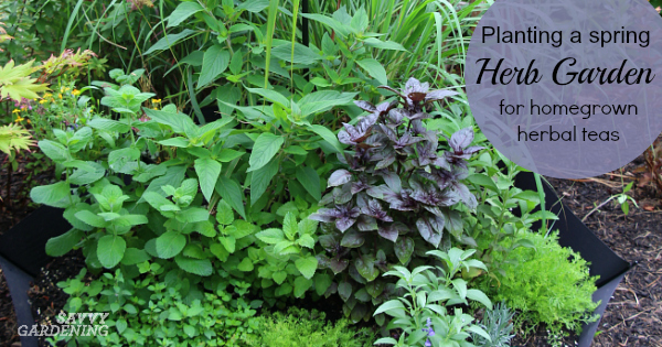 Planting a spring herb garden for homegrown herbal teas