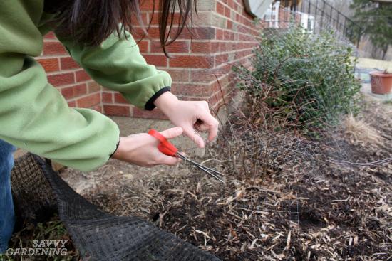 Garden deer netting for individual plants.