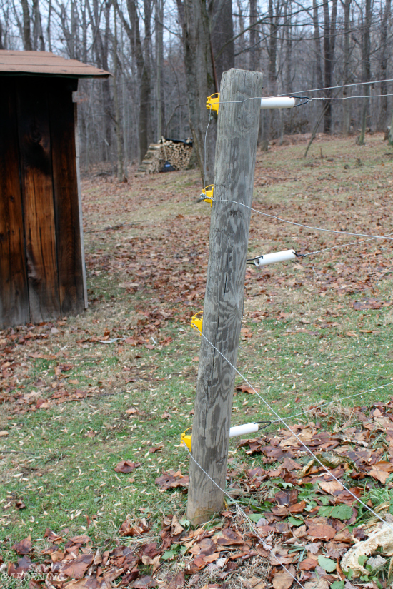 Electric deer fencing helps keep deer out of the garden.