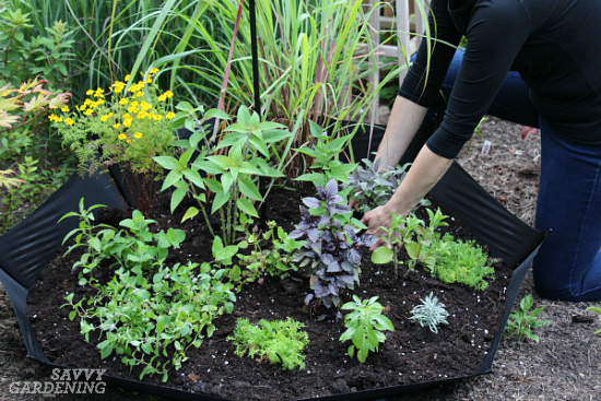Planting a spring herb garden for homegrown herbal teas is a fun project for all gardeners.