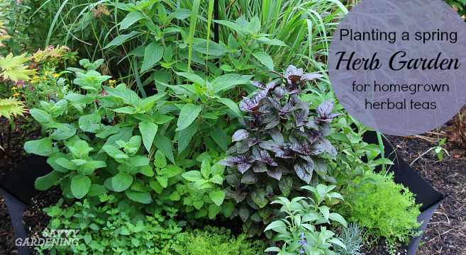 Plant a spring herb garden for homegrown herbal teas using this creative idea.