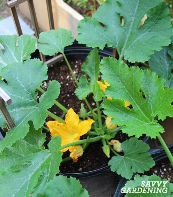 Boost your success with vegetable container gardening