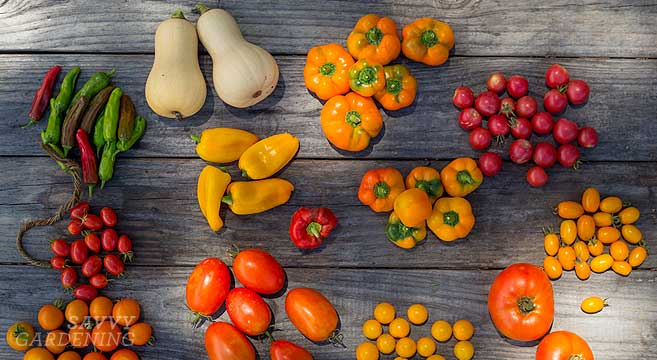 6 awesome gourmet veggies to plant in the garden