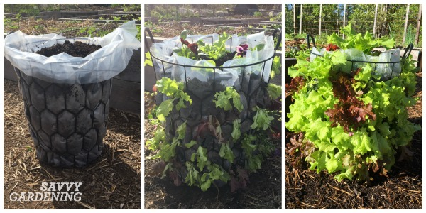 Growing your own lettuce tower is easy and a fun way to grow more food.