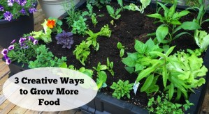 Get inspired with these 3 creative projects to help you grow more food!