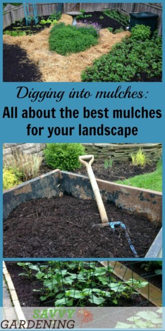 Start digging into mulches by getting the low-down on some of the best types of landscape mulch.