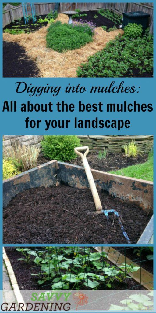 Merveilleux Savvy Gardening