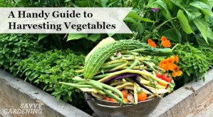 Learn how and when to harvest your homegrown vegetables!