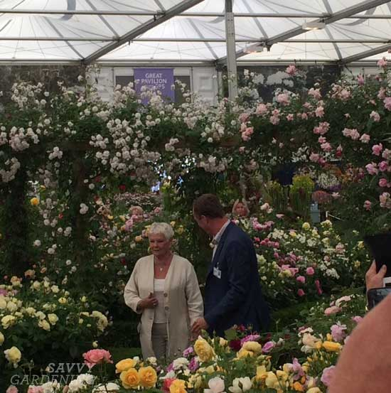 Judi Dench at the RHS Chelsea Flower Show 2017