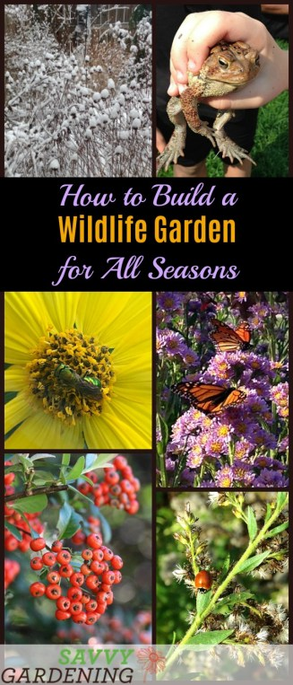 How to build a wildlife garden for all seasons: Tips and plants for success