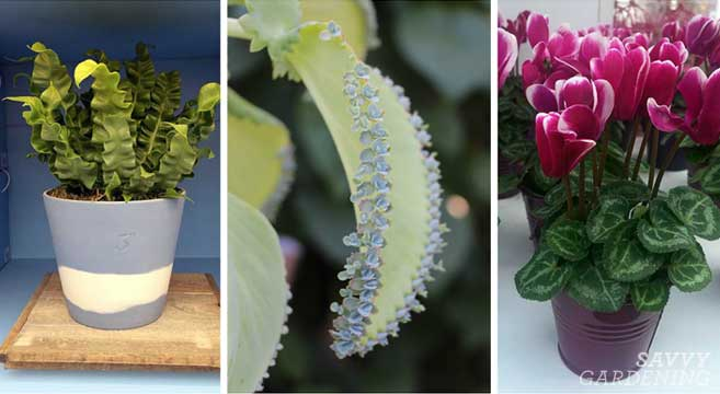 A Savvy list of the coolest houseplants