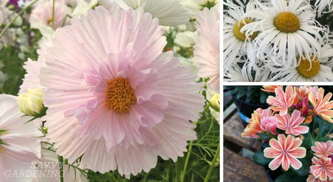 10 plants with showy blooms