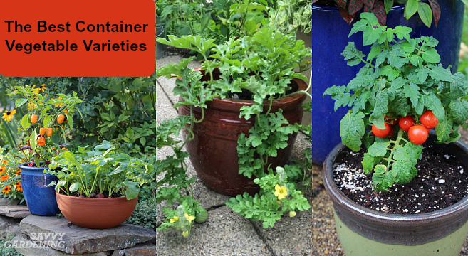 Vegetable Garden Containers Ideas: Container Vegetable Plants: The Best Varieties For Success