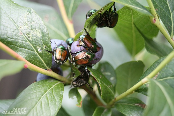 Garden pest ID is made easier with these tips.